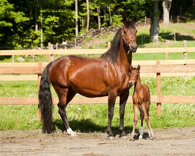 baccarats-star-fire3-foal