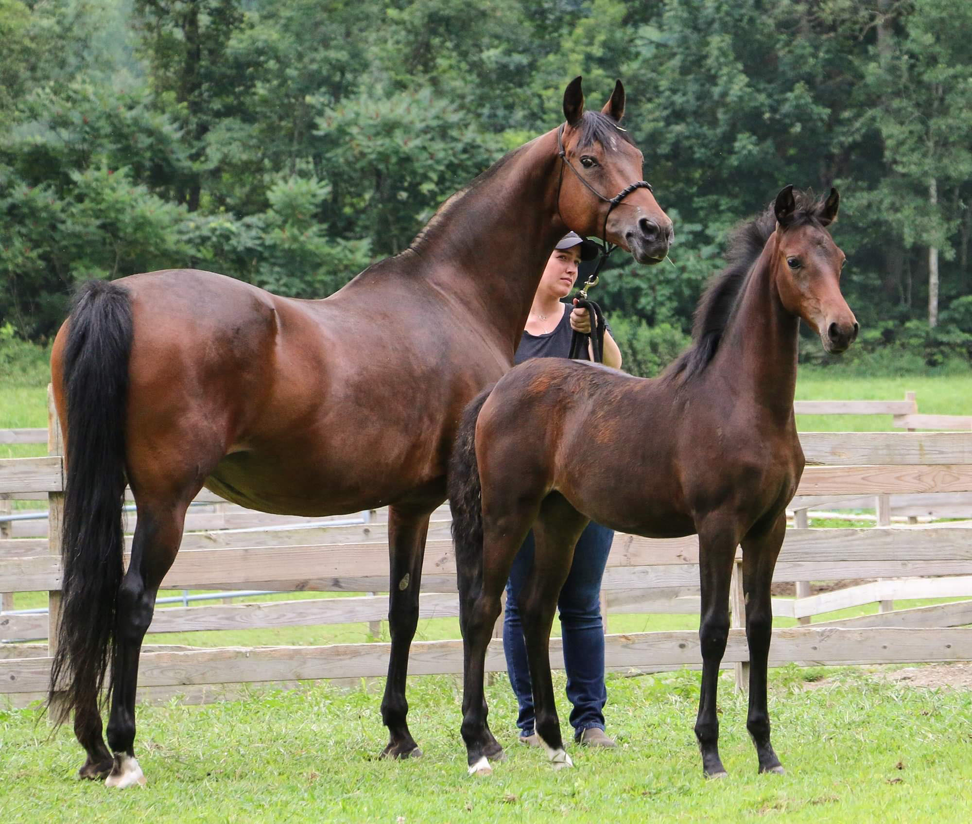Dragonfire FourthDMension and Newmont's Miss Right